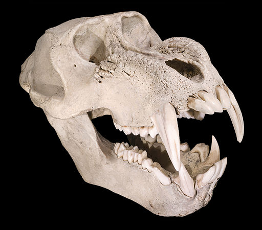mandrill skull: death awaits you with nasty big pointy teeth